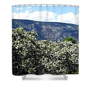 Apple Blossoms Shower Curtain by Will Borden