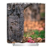 Apple Not Far From Tree Shower Curtain