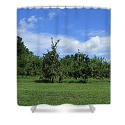 Apple Orchard At Vineyard Shower Curtain