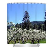 Apple Orchard In Bloom Shower Curtain