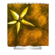 Apple Slice Shower Curtain