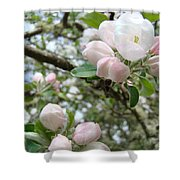 Apple Tree Blossoms Art Prints Apple Blossom Buds Baslee Troutman Shower Curtain