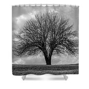 Apple Tree Bw Shower Curtain