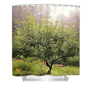 Apple Tree In The Garden Shower Curtain