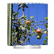 Apple Tree With Apples And Flowers. Amazing Nature Shower Curtain