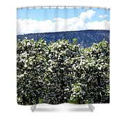 Apple Trees In Bloom     Shower Curtain