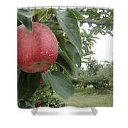 Apples 101010 Shower Curtain