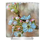 Apples In The Spring Shower Curtain