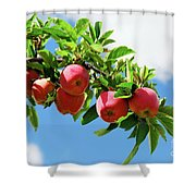 Apples On A Branch Shower Curtain