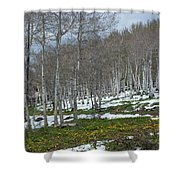 Approaching Spring In The Aspen Forest Shower Curtain by Cascade Colors