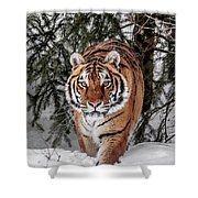 Approaching Tiger Shower Curtain