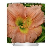 Apricot Day Lily Shower Curtain
