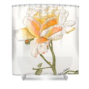 Apricot Rose Shower Curtain
