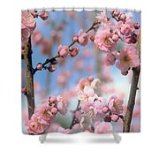 Apricot Tree Blossoms Shower Curtain