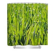 April Dewdrop Fairylights Shower Curtain