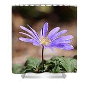 April Grecian Wind Flower  Shower Curtain