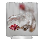April Ice Storm 13 Shower Curtain