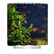 Aquarium Fish And Plants In Zoo Shower Curtain