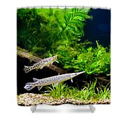 Aquarium Fish Couple In Zoo Shower Curtain