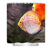 Aquarium Orange Spotted Fish Shower Curtain