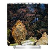 Aquarium Stones Arrangement Shower Curtain
