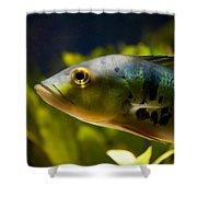 Aquarium Striped Fish Portrait Shower Curtain