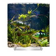 Aquarium Striped Fishes Group Shower Curtain