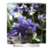 Aquilegia -  Columbine Shower Curtain