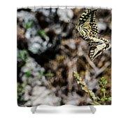 Aquino's Butterflies Shower Curtain