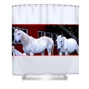 Arab Horses At Home, Behind Their Fence   Shower Curtain
