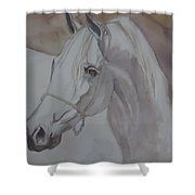 Arab Stallion In The Desert Shower Curtain