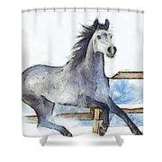 Arabian Horse And Snow - Da Shower Curtain