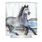 Arabian Horse And Snow - Pa Shower Curtain