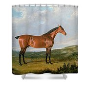 Arabian Horse Shower Curtain