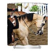 Arabian Show Horse 5 Shower Curtain