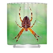Arachnid Shower Curtain