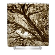 Arboreal Plateau 2 Shower Curtain