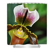Arboretum Tropical House Orchid II Shower Curtain