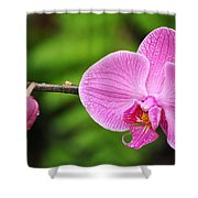 Arboretum Tropical House Orchid Shower Curtain