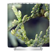 Arborvitae Shower Curtain