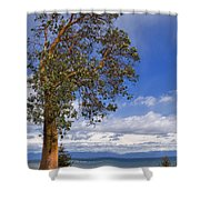 Arbutus Tree At Rathtrevor Beach British Columbia Shower Curtain