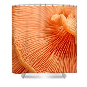 Arc Of Life Shower Curtain