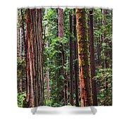 Arcata Forest Shower Curtain