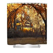 Arch Of Trees Shower Curtain