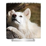 Arctic Curiosity Shower Curtain