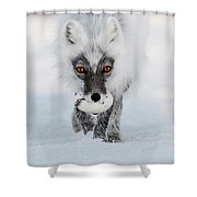 Arctic Fox And Snow Goose Egg Shower Curtain