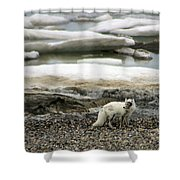 Arctic Fox By Frozen Ocean Shower Curtain