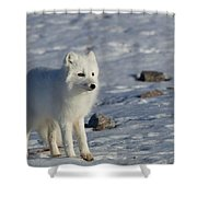 Arctic Fox Shower Curtain