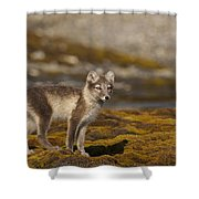 Arctic Fox In Tundra Shower Curtain