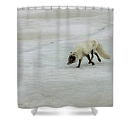 Arctic Fox On Ice Shower Curtain